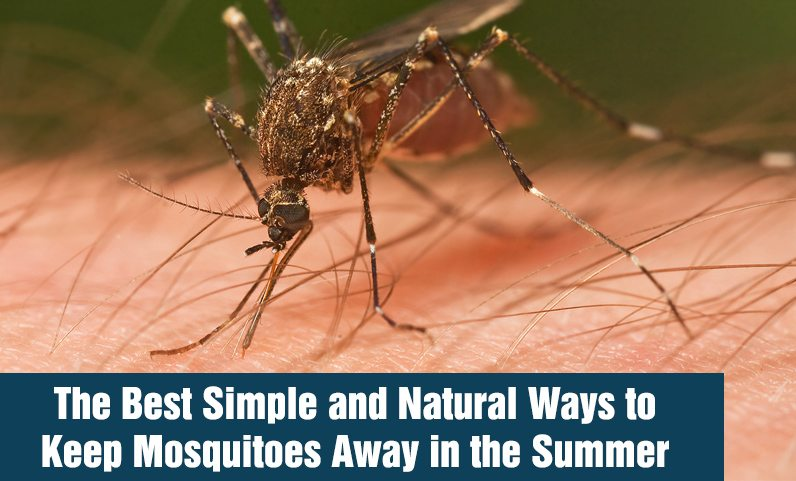 The Best Simple and Natural Ways to Keep Mosquitoes Away in the Summer